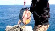 ep29:沖縄シイラで巨大サメを釣り上げる!【全編】