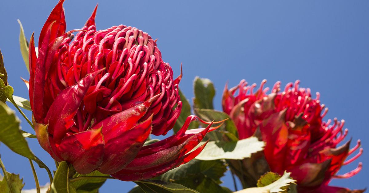 Australian Bush Flower Essence(オーストラリアン・ブッシュフラワーエッセンス)のイメージ画像