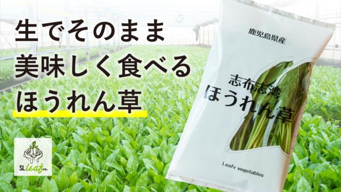 生のままでもおいしく食べられる! 栽培期間中農薬不使用の「志布志湾ほうれん草」