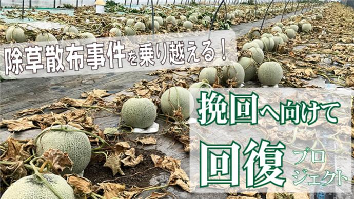メロン除草剤散布事件を乗り越える!挽回に向けて、【寺坂農園】回復プロジェクト